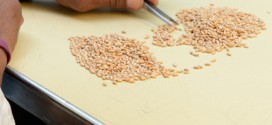 Detecting no GM event, Korea ends U.S. wheat import suspension