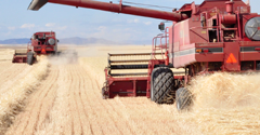 Without overseas trade, Washington wheat industry would suffer