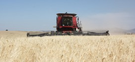 Wheat growers push back against Farm Bill critics