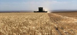 Falling number appears in wheat, not as 'massive' as 2016