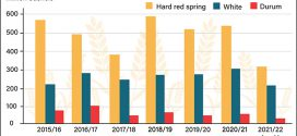 Drought dampens production, export prospects for key US wheat classes