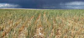 Washington governor seeks presidential assistance for drought-stricken producers