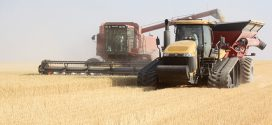 2021 winter, spring wheat production down nearly 50% in Washington